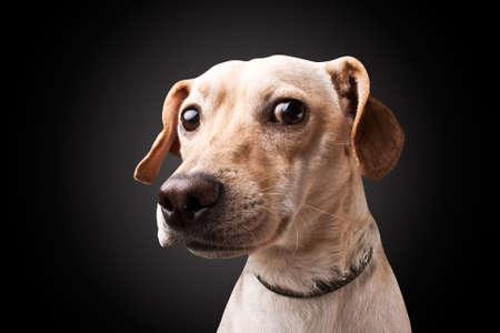 dog on black background  photo