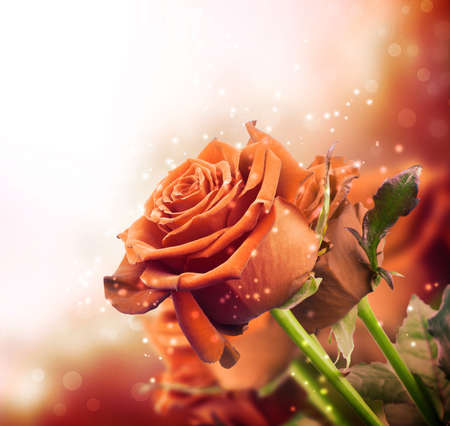background with red roses with sparkles Standard-Bild
