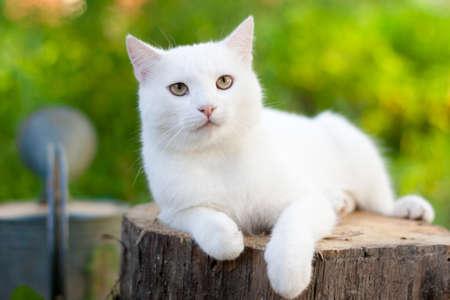 bílá kočka na zahradě