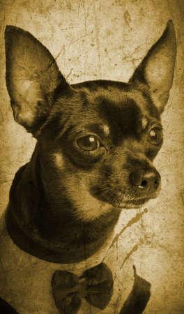 Toy terrier dog - vintage photo Stock Photo - 14041288