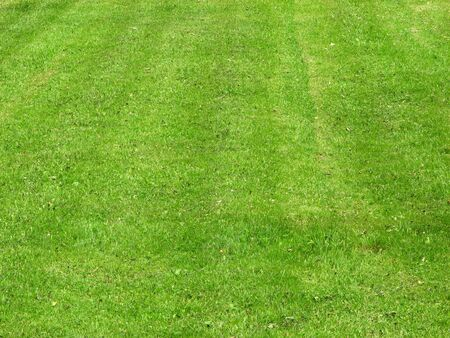 unevenly: unevenly mown grass and a few dry leaves Stock Photo