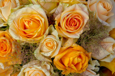 bouquet of creamy yellow roses