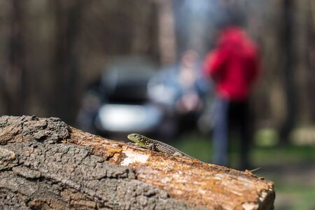 dragoon: Tree lizard stay on the old wood