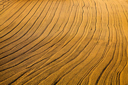 crop harvest: Well detailed lines and patterns in the fields