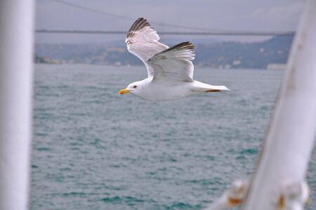 seagull, bird photo