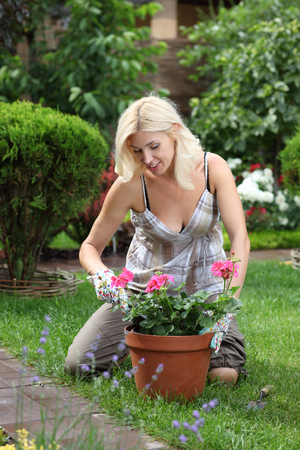work environment: Gardening woman cutting the rose bush in the garden