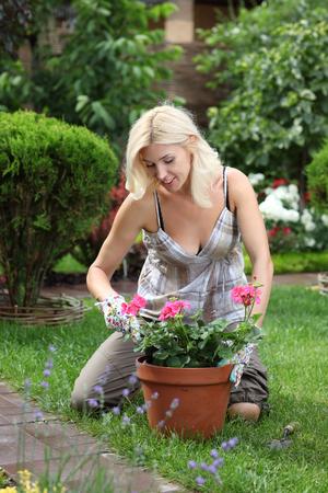 herramientas de trabajo: Jardinería mujer cortar el arbusto color de rosa en el jardín