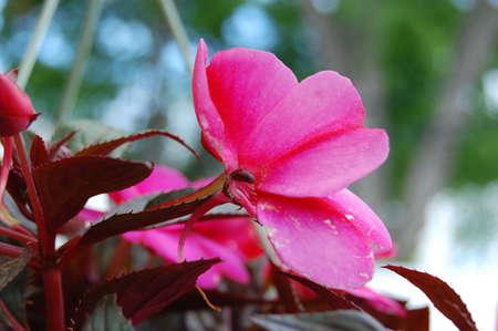 これは花のクローズ アップです。