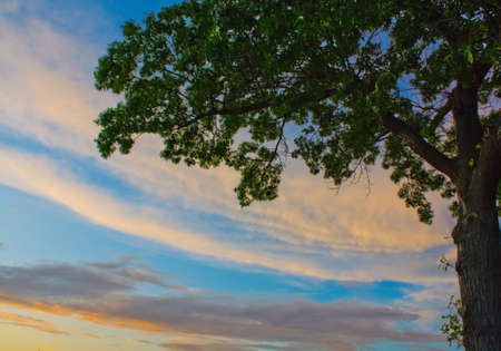 Summer sky with sunset clouds and a partial green tree