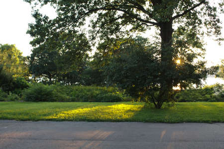 Sunset casting light and shadows on green grass