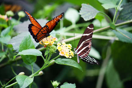 A pair of beautiful butterflies landed on summer spring blossoms