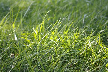 Beautiful green grass blowing in the wind with a streak of sunlight Stock Photo