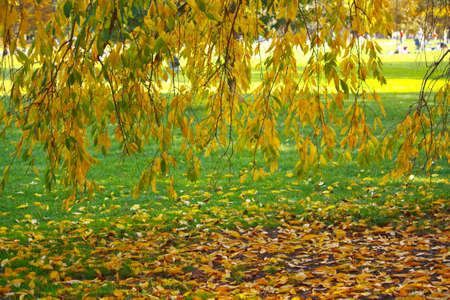 Autumn leaves fallling on green grass Stock Photo