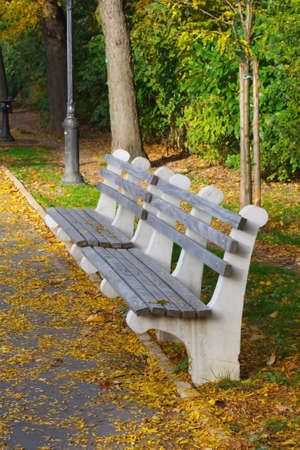 Park Benches among Autumn Leaves