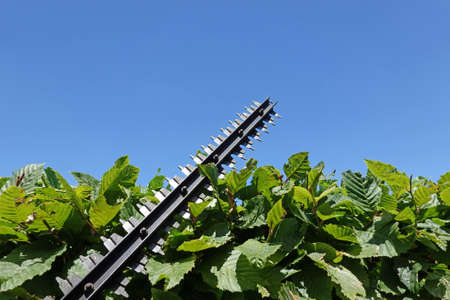 Hedge trimming with blue skies in the background