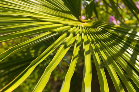 vertica: Hairy palm tree leafs up close  Stock Photo