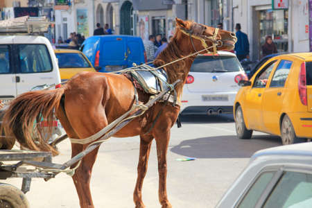 horse in the city from mahdia with a heavy load 版權商用圖片