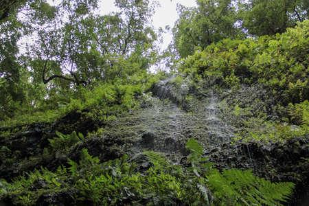 nature in Los Tilos Imagens