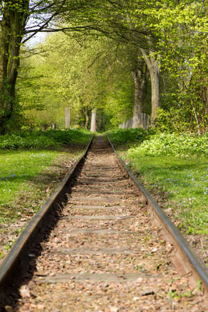 forest railroad: Forest railroad perspective