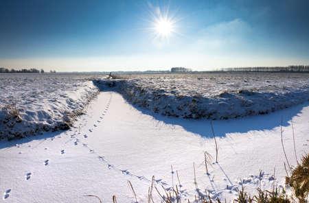 animal tracks: Le tracce degli animali sulla neve in una bella giornata di sole invernale