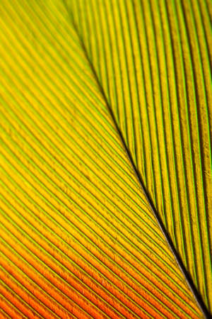 Macro shot of a feather from a green amazone parrot photo