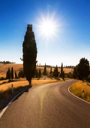 Beautiful backlit image of a road in Tuscany, Italy Stock Photo - 15569168