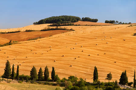 Landscape in Tuscany, Italy, with a typical golden field with bales of hay photo