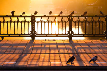 Pigeons on a bridge on a golden morning in Amsterdam, Netherlands photo