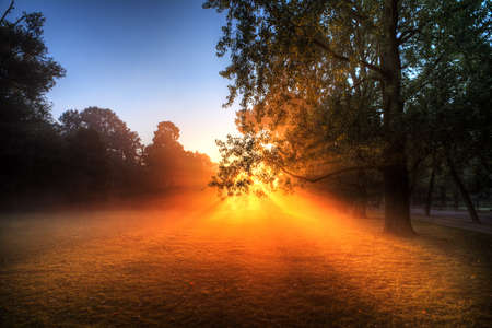 Early morning sunrise behind the trees in the Vondelpark, Amsterdam, on a foggy morning with a powerful sunburst photo