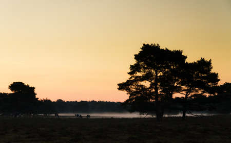 Early morning sunrise landscape with cows and a foggy landscape photo