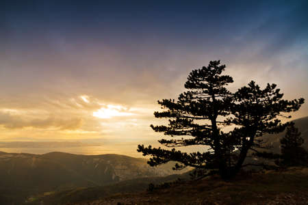Mountain tree in stormy weather at sunset in Croatia, Velebit national park photo