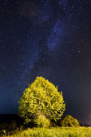 Tree lit by street lights with the milky way above it Stock Photo - 17963691