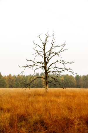 Dead tree in a field in national park  De hoge veluwe  in the Netherlands in autumn Stock Photo - 18390928