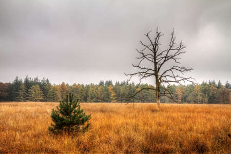 Dead and new tree in national park  De hoge veluwe  in the Netherlands in autumn  HDR Stock Photo - 18390958