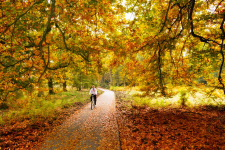 Cycling trough the woods in national park  De hoge veluwe  in the Netherlands in autumn Stock Photo