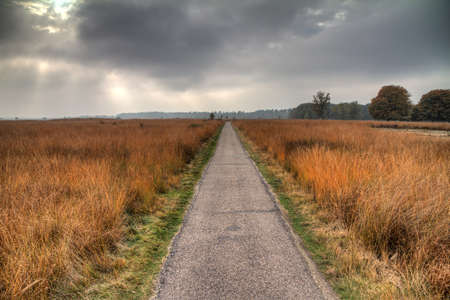 veluwe: Road through the heath in national park  De hoge Veluwe  in the Netherlands, with a dramatic sky  HDR Stock Photo