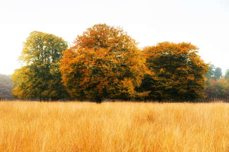 Autumn trees on the edge of the forest in national park  De hoge Veluwe  in the Netherlands Stock Photo - 18390945