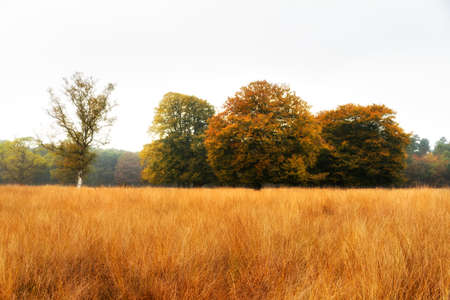 Autumn trees on the edge of the forest in national park  De hoge Veluwe  in the Netherlands Stock Photo - 18390935