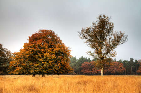 veluwe: Autumn trees on the edge of the forest in national park  De hoge Veluwe  in the Netherlands