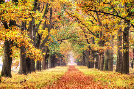 veluwe: Beautiful autumn forest in national park  De hoge Veluwe  in the Netherlands  HDR Stock Photo
