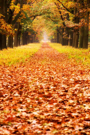 Beautiful autumn forest in national park  De hoge Veluwe  in the Netherlands