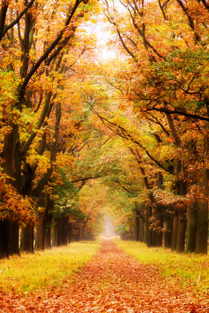 veluwe: Beautiful autumn forest in national park  De hoge Veluwe  in the Netherlands