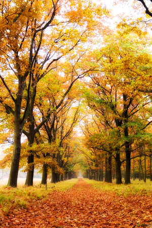 national scenic trail: Beautiful autumn forest in national park  De hoge Veluwe  in the Netherlands