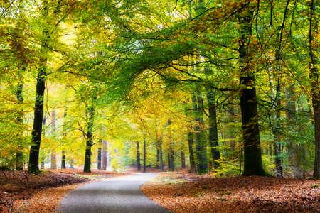 네덜란드 국립 공원 드 호헤 벨 루웨 가을에 숲을 통해 아름다운 도로 스톡 콘텐츠
