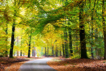 Beautiful road through the forest in autumn in national park  De Hoge Veluwe  in the Netherlands photo