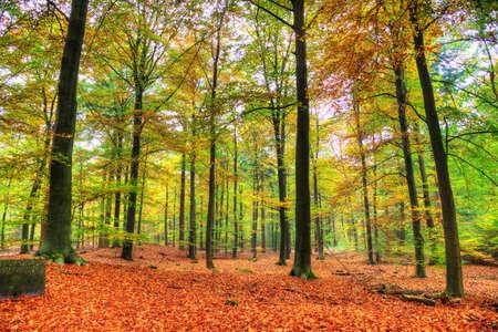 네덜란드 HDR 국립 공원 데 호헤 벨 루웨에 가을 숲