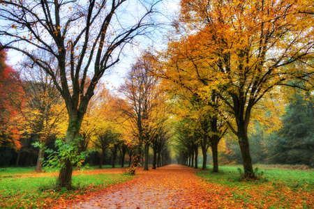 national scenic trail: Beautiful colored trees in het Amsterdamse bos  Amsterdam wood  in the Netherlands  HDR Stock Photo