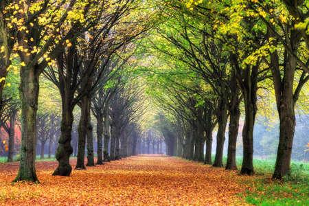 HET의 Amsterdamse에서 아름 다운 색깔 나무 네덜란드 HDR 암스테르담 나무를 BOS 스톡 콘텐츠