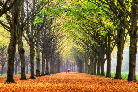 Elderly couple walking in the forest in autumn in het Amsterdamse bos  Amsterdam wood  in the Netherlands  HDR photo