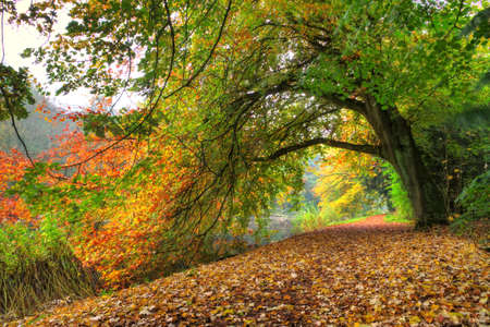 Path under a big autumn tree in het Amsterdamse bos Amsterdam wood in the Netherlands HDR